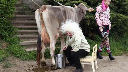 Bob Klepl si vyzkoušel dojení krávy.