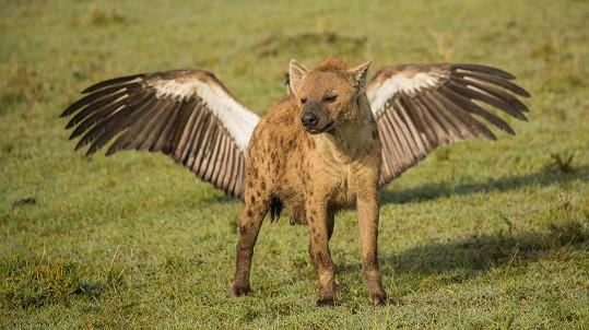 Hyena připomíná bájného Pegase.