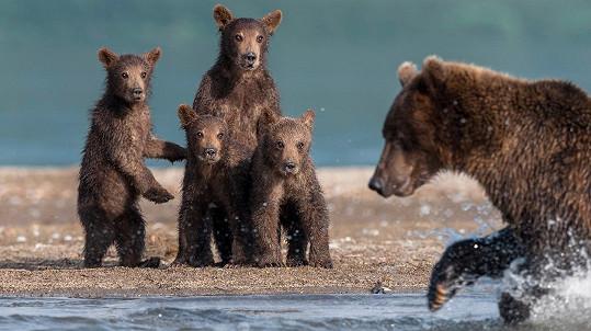 Medvíďata se mají co učit.