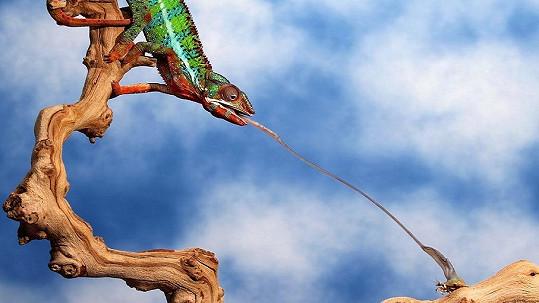 Tohle dokáže jen chameleon.
