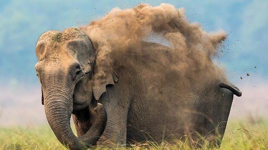 Slon si poradí i bez vody.