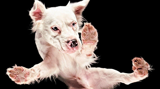 Umí psi létat?