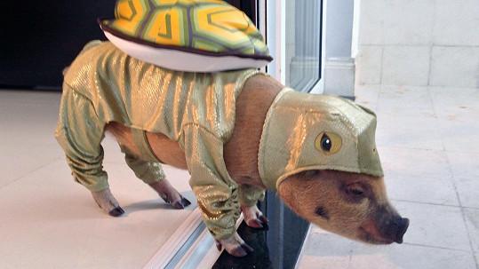 Jamon v přestrojení za želvu.