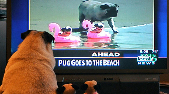 I psi mají své dny... (ilustrační foto)