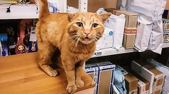 Kočky si s kuchyňskými spotřebiči příliš nerozumí. (ilustrační foto)