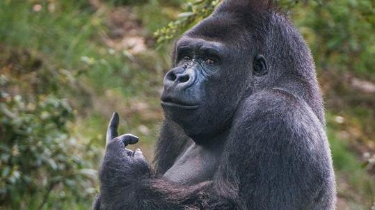 I gorily mají právo vyjádřit svůj názor...
