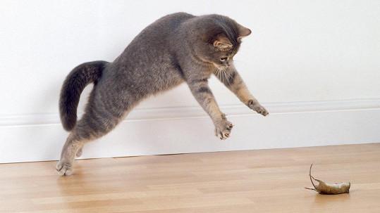 Kočka vs. myš (ilustrační foto)