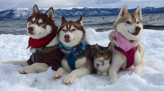 Rosie má náhradní psí rodinu.