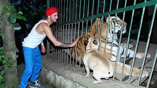 Sámer si tygra hladil, jeho pes ho očuchal.