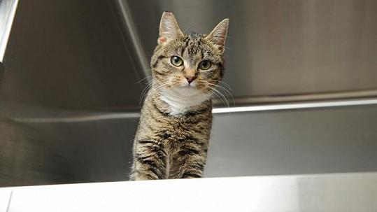 Kočka, která přežila pár ze 36 metrů.