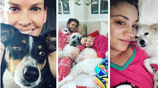 Tyto celebrity si své čtyřnohé mazlíčky adoptovaly.