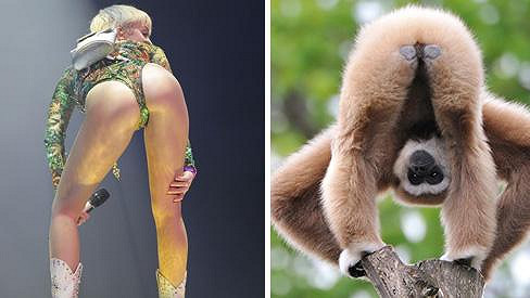 Zdroj inspirace Miley Cyrus