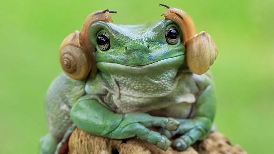 Žába připomíná princeznu Leiu ze Star Wars.