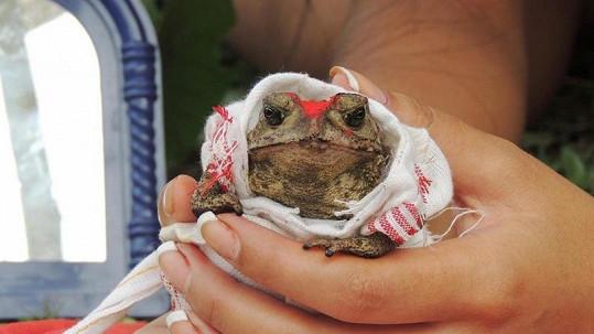 Tato žába se vdává.