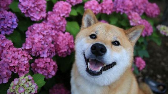 Maru je díky úsměvu hvězdou internetu.