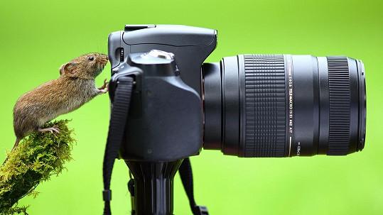 Tato myš má na focení talent.