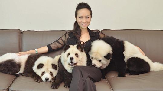Psí smečka připomíná pandy.