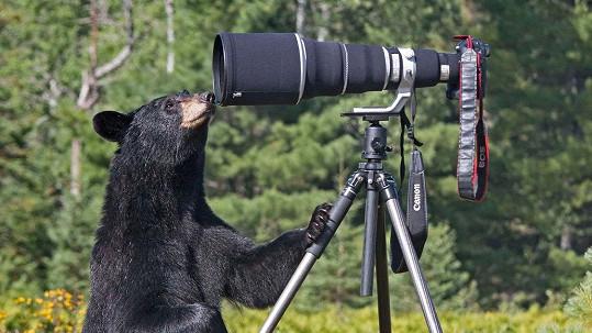 Medvědice si chtěla prohlédnout foťák.