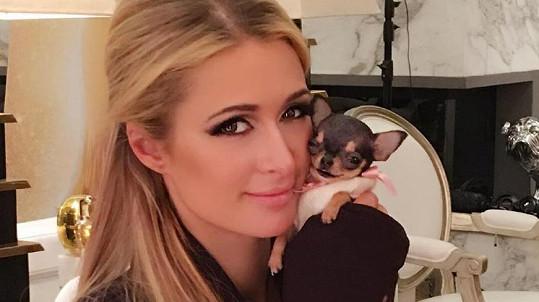 Paris Hilton a její nový mazlíček