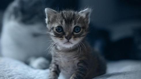 Krásná kočička šíření