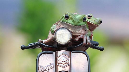 Takhle vypadá žabí jízda.