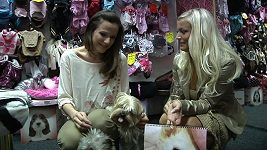 Radka Kocurová - psí kalendář