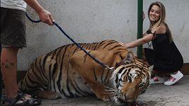 Andrea Bezděková v tygří kleci
